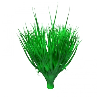 Spirulina planta, algas subaquáticas