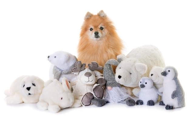 Spitz pomeranian e brinquedos fofinhos