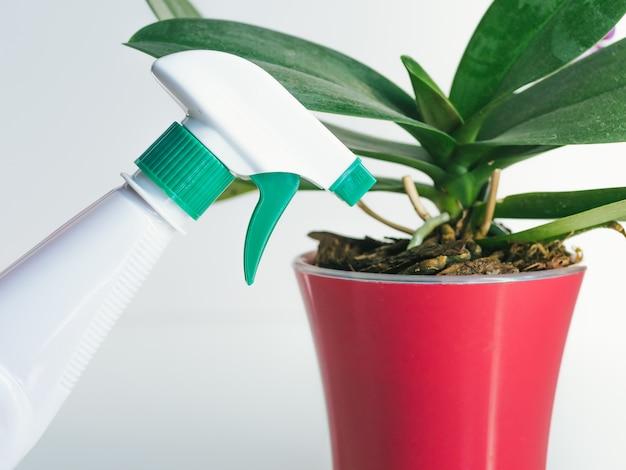 Spray de água e plantas domésticas