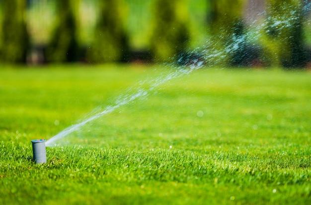 Sprinkler garden lawn