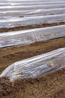 Sprouts estufa casa de vidro linhas de plástico