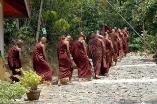 Sri lanka monges