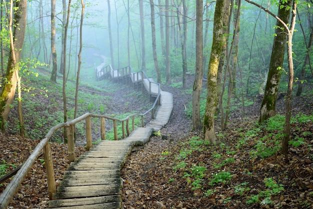 Staiway na floresta desaparecendo em forte nevoeiro
