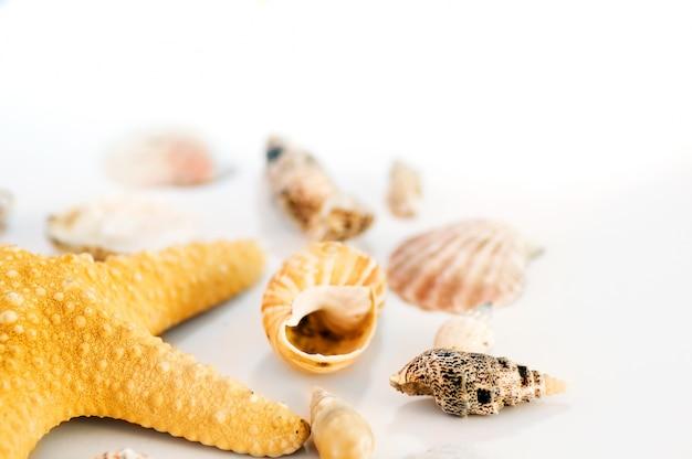 Starfish e conchas