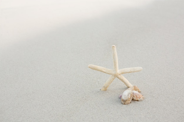 Starfish e escudos na areia