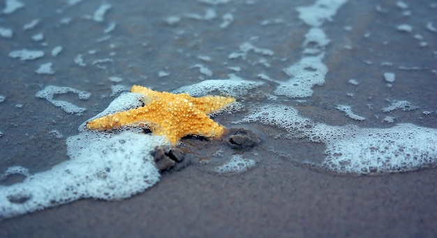 Starfish em uma praia arenosa