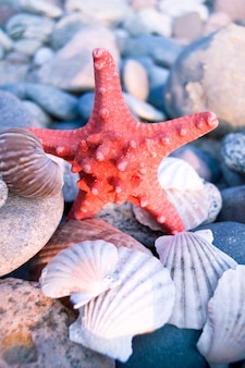 Starfish que está sobre conchas
