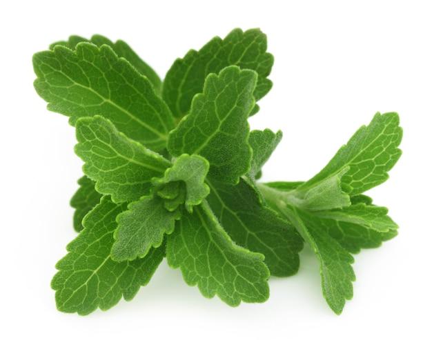 Stevia- um substituto do açúcar isolado sobre fundo branco