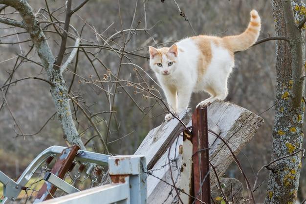 Street wildcat