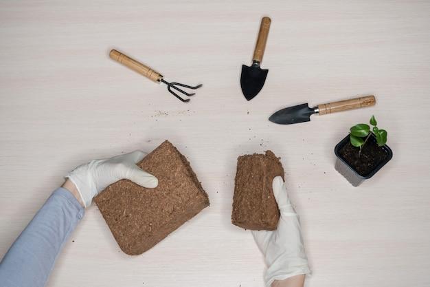 Substrato de coco para o solo. briquete de substrato de coco prensado.