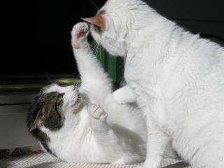Sucata de gato