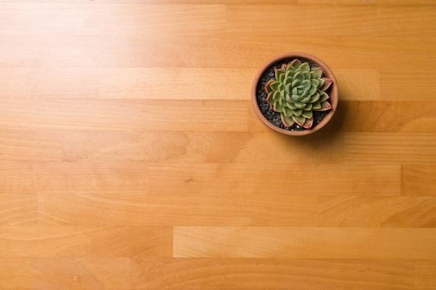 Suculenta no fundo da mesa de madeira do pote com espaço de cópia.