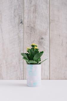 Suculenta planta com flores amarelas plantadas em lata