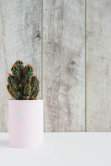 Suculenta planta em recipiente pintado de rosa na mesa branca contra a parede de madeira