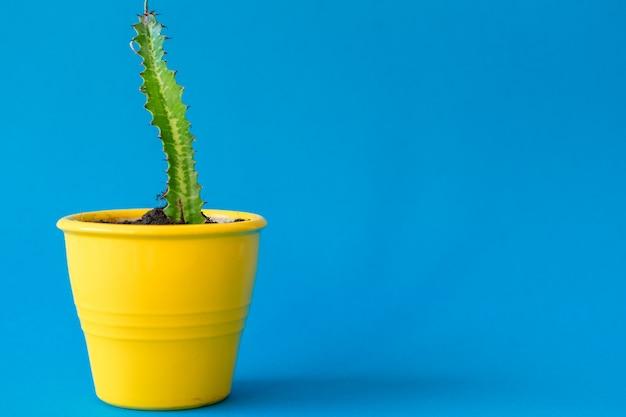 Suculenta planta em uma panela de barro sobre um azul