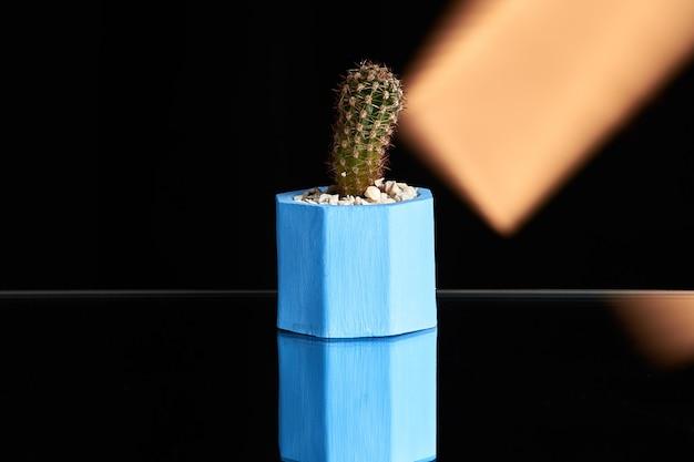 Suculentas, cacto no potenciômetro concreto azul no fundo da luz alaranjada. foto limpa