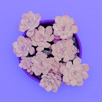 Suculentas cactos. cores roxas. conceito de amante de planta plana mínima