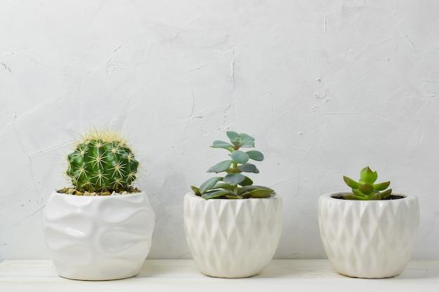 Suculentas diferentes em potes diferentes. três flores de interior em um vaso em uma prateleira de madeira