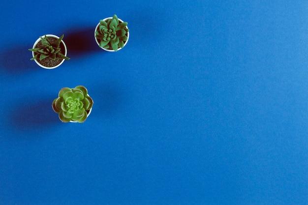 Suculentas diferentes em vasos sobre fundo de cor azul
