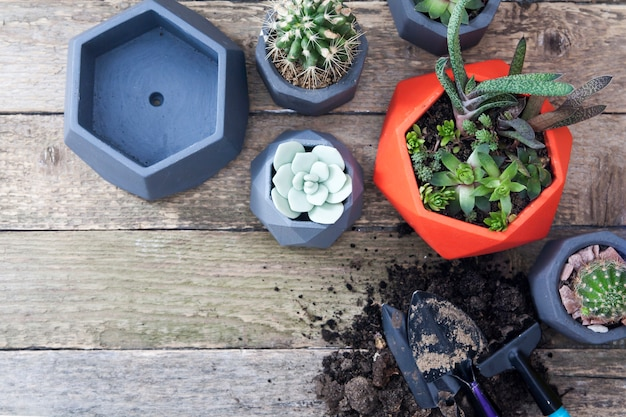 Suculentas e cactos em vasos. apartamento leigos em uma mesa de madeira. ferramentas e terra para o plantio de plantas. conceito de plantio de primavera