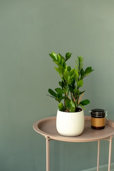 Suculentas em pote de concreto diy. decoração escandinava do interior do quarto. parede cinza
