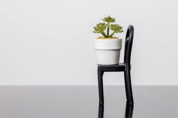 Suculentas em uma cadeira fica em uma superfície de vidro preto sobre uma superfície branca. decoração de interiores de quarto escandinavo