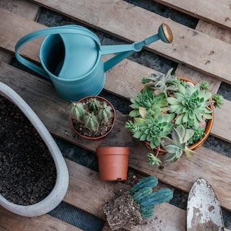 Suculentas em vasos e cactos prontos para serem replantados em fundo de madeira