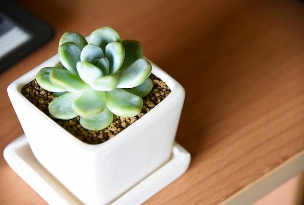 Suculentas em vasos na mesa de madeira com fundo verde da natureza