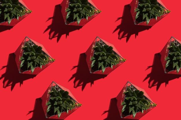 Suculentas no florário em um fundo vermelho