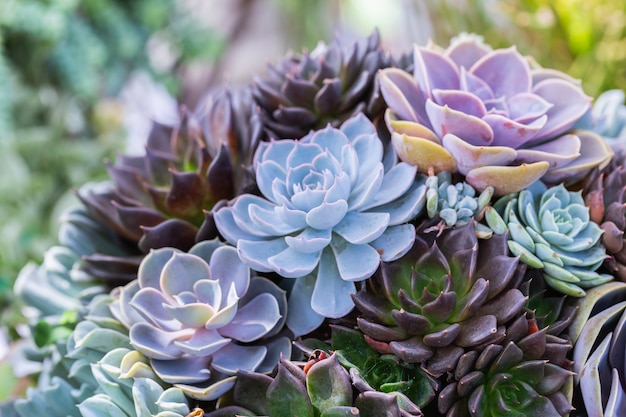 Suculentas ou cactos no jardim botânico do deserto