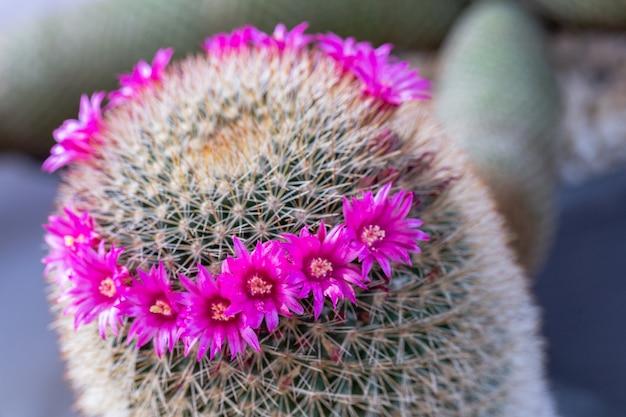 Suculentas ou flor de cacto no jardim botânico do deserto para decoração e design de agricultura.
