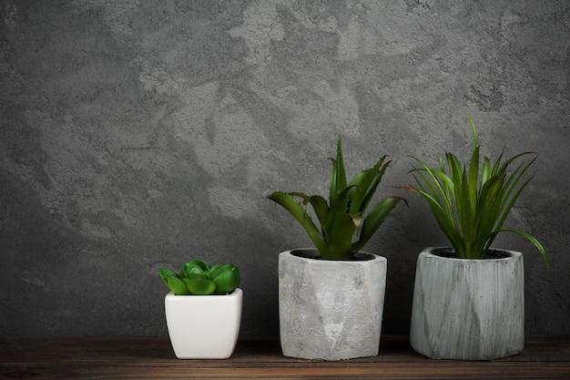 Suculentas plantas em vasos de concretos, copyspace