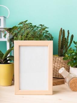 Suculentas, plantas em vasos