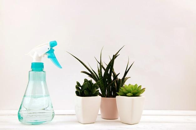 Suculentas sempre-verdes pequenas caseiras estão ao lado de um frasco de spray com água em um branco