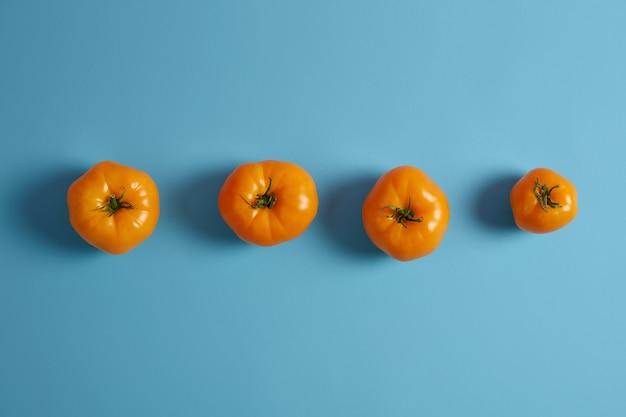 Suculentos tomates maduros da herança amarela com hastes verdes isoladas sobre fundo azul. vista de cima. deliciosos vegetais frescos da estação colhidos no jardim. comida orgânica. layout criativo.