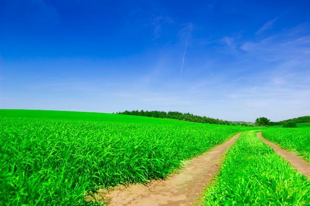 Sujeira caminho em um campo verde