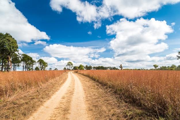 Sujeira estrada rural no campo enevoado com lindo céu azul
