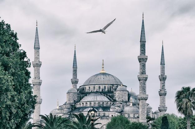 Sultan ahmed mosque ou mesquita azul com gaivota no céu