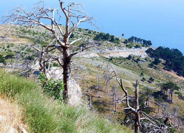 Summer llogara pass view com árvores secas e cardo na encosta e superfície da água do mar (albânia)