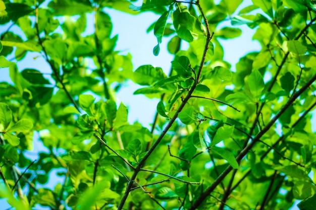 Sun irradia através das árvores de madeiras no fundo da paisagem da floresta.