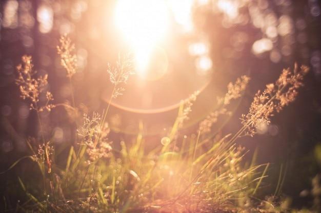 Sun que brilha através da grama