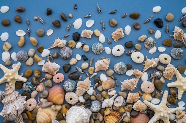 Superfície azul com uma grande variedade de conchas marinhas