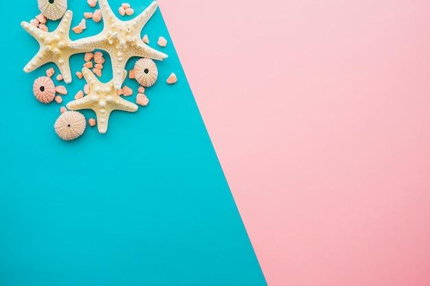 Superfície azul e rosa com estrelas do mar e ouriços-do-mar