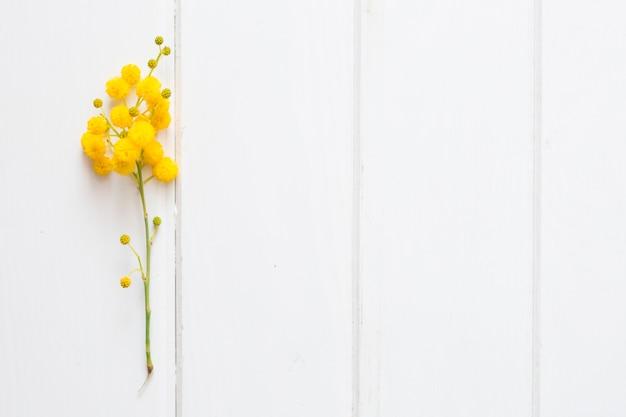 Superfície branca com a planta amarela decorativa