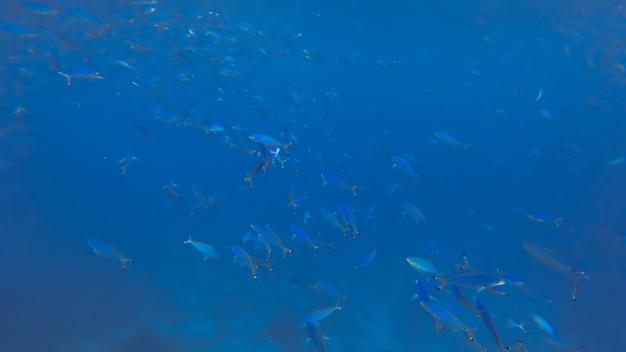 Superfície da água azul com peixes