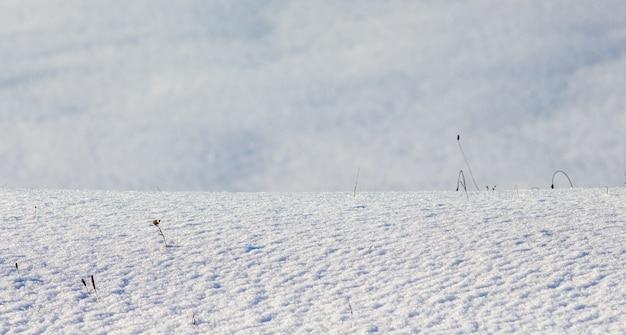 Superfície da terra coberta de neve em tempo ensolarado, textura de neve_