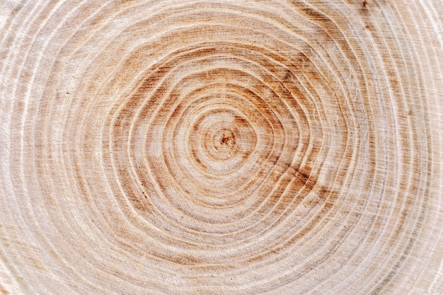 Superfície de anéis de árvores naturais