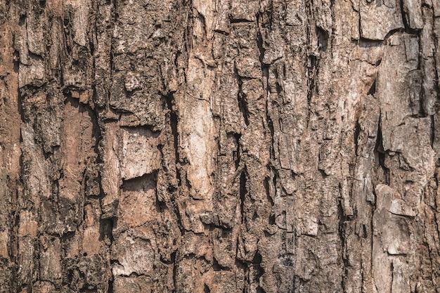 Superfície de casca de árvore