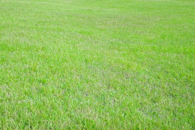 Superfície de grama verde