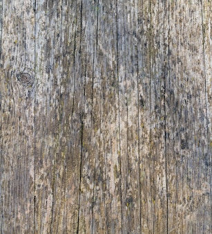 Superfície de madeira rachada coberta com musgo e líquen, disposição vertical